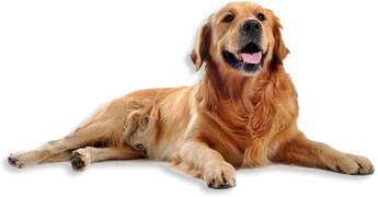 dog_6_transparent