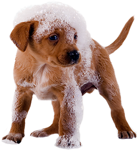 puppy with shampoo suds